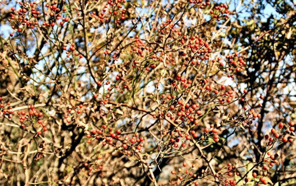 금정산 열매