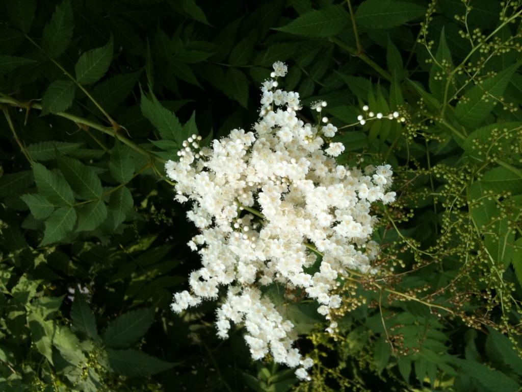 길가에 핀 이름모르는 꽃