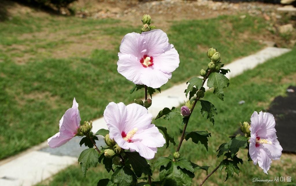 무궁화꽃 새마을