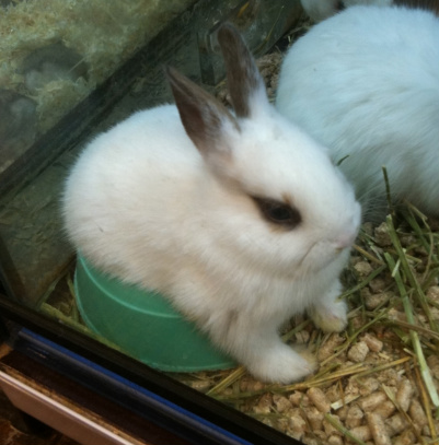 수상한 토끼